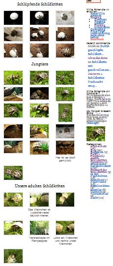 Bilder und Fotos von Schildkröten