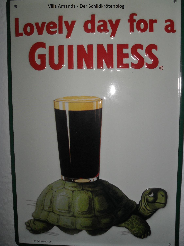 Schildkröte Guinness