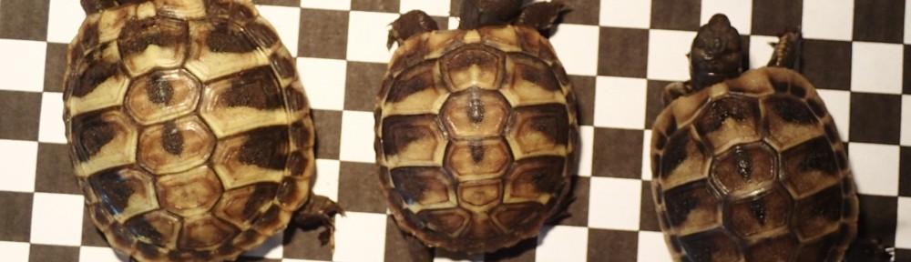 So unterschiedlich wachsen Schildkröten