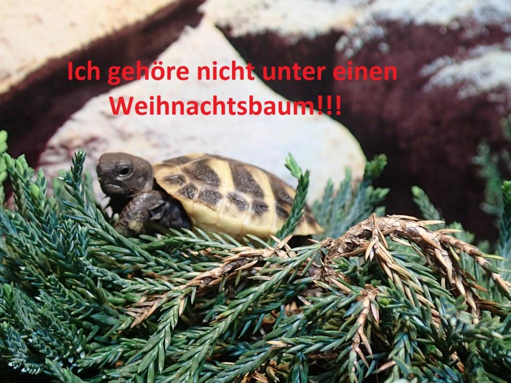 Schildkröte Weihnachtsbaum