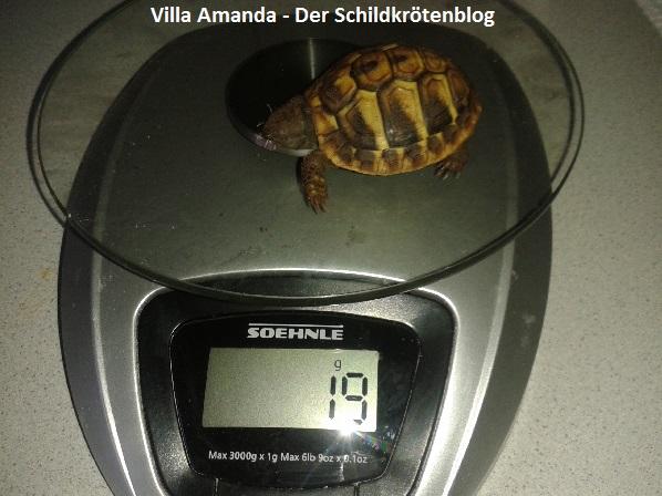 Kleiner Kühlschrank Für Schildkröten : Villa amanda u2013 der schildkröten blog alles rund ums thema