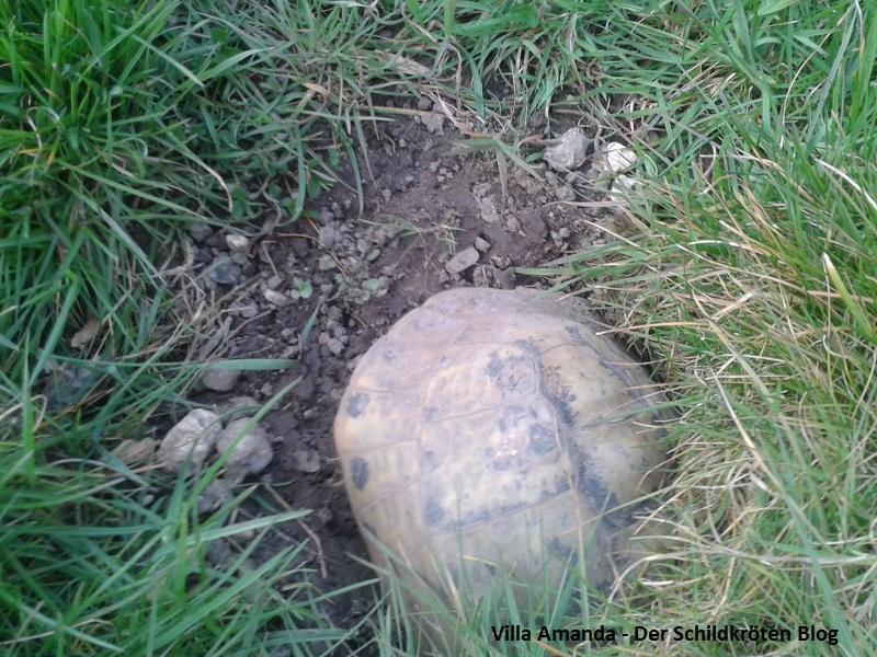 Kleiner Kühlschrank Für Schildkröten : Winterstarre villa amanda u der schildkröten seite