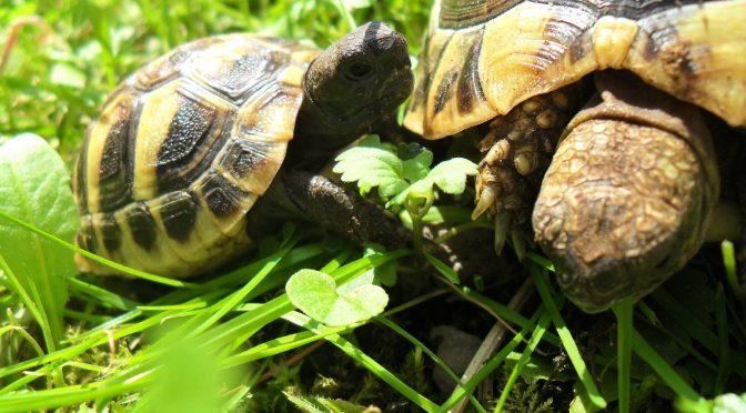 Schildkröten trotzen der Eiseskälte