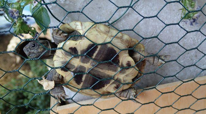Kletterschildkröte =)
