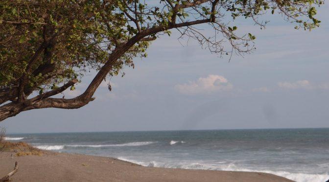 Gastbeitrag: Schildkröten – Überraschung in Nicaragua