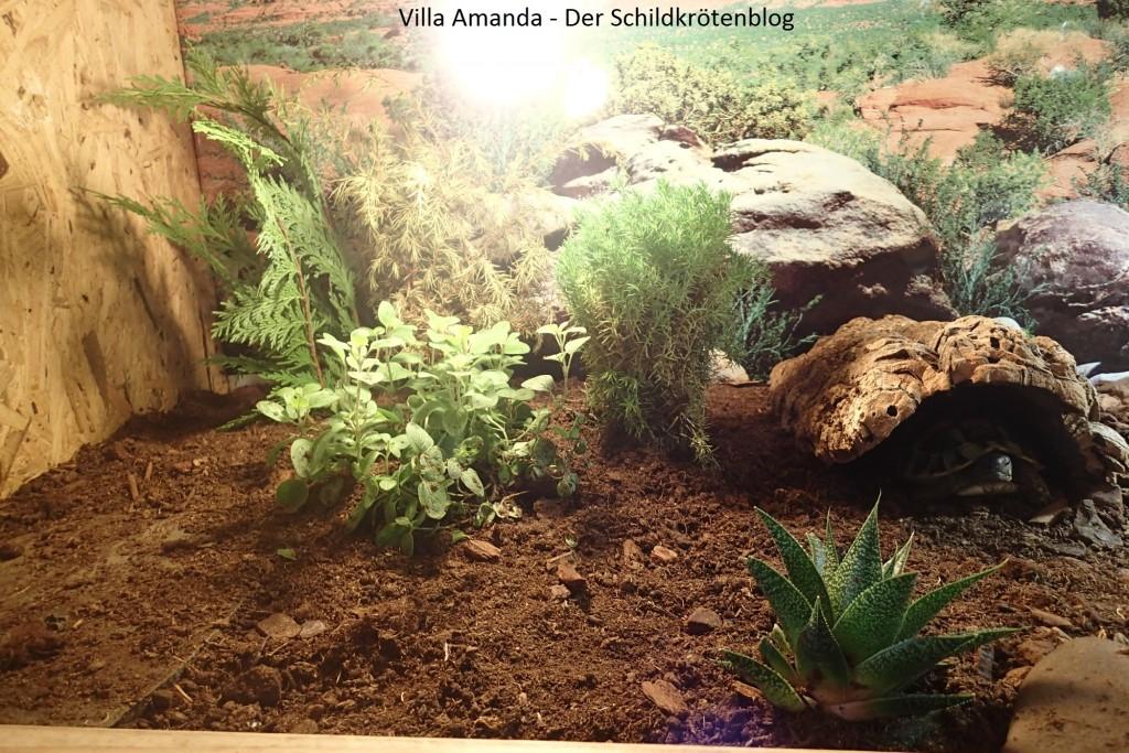 schildkr ten im terrarium halten villa amanda der schildkr ten blog. Black Bedroom Furniture Sets. Home Design Ideas