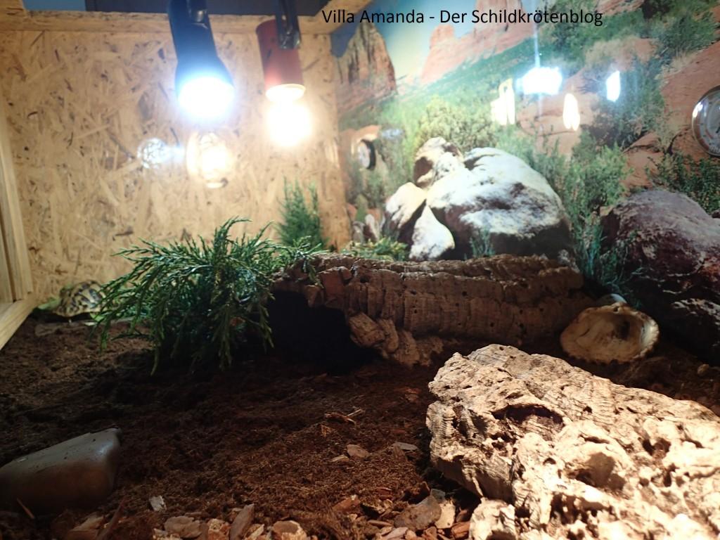 Terrarium griechische Landschildkröte
