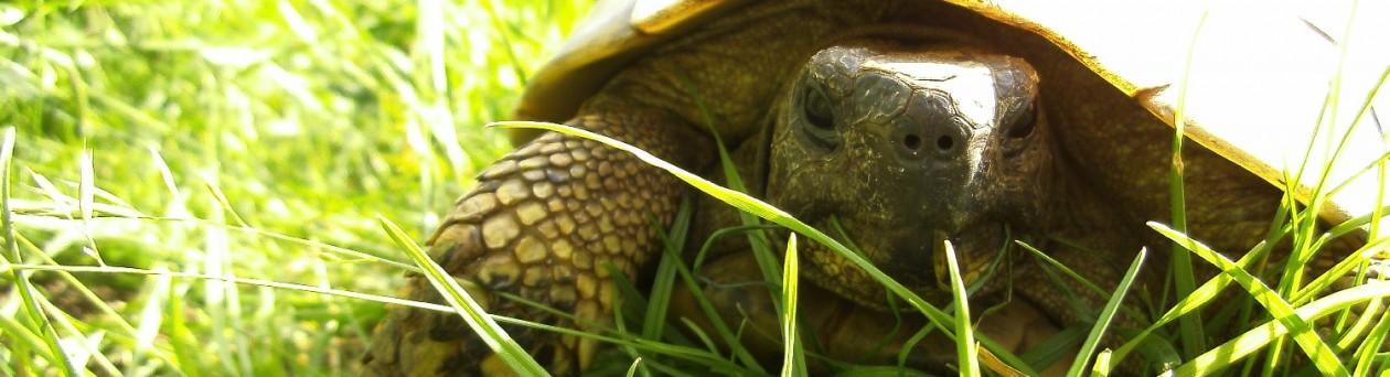 Villa Amanda – Der Schildkröten Blog
