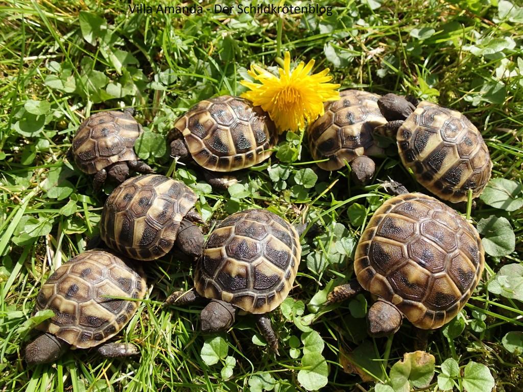 Jungtiere Babyschildkröten