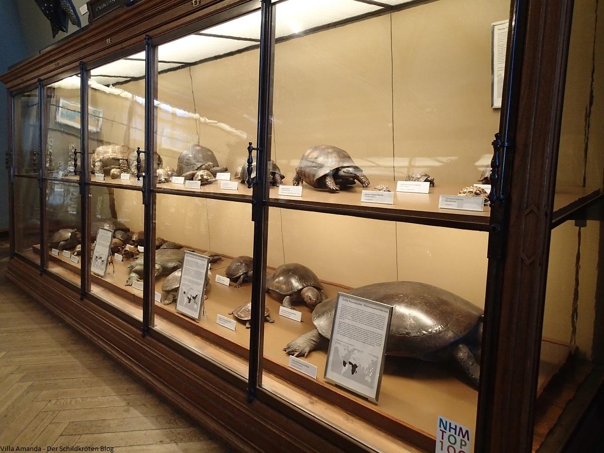 Schildkröten im Naturhistorischen Museum in Wien