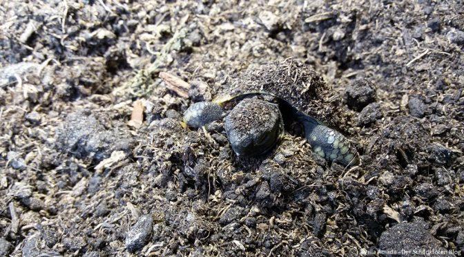 Starthilfe für Schildkröten nach der Winterstarre: Was muss ich beachten?