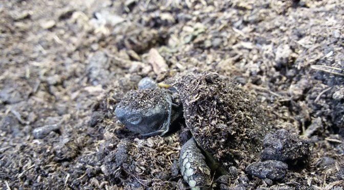 Schildkröten kommen aus der Winterstarre