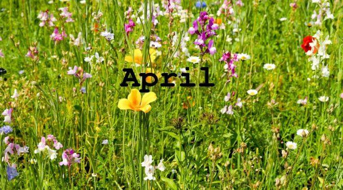 Futterpflanzen Sammelkalender: Schildkrötenfutter im April