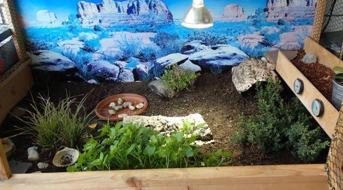 Frühjahrsputz im Gehege unserer Babyschildkröten