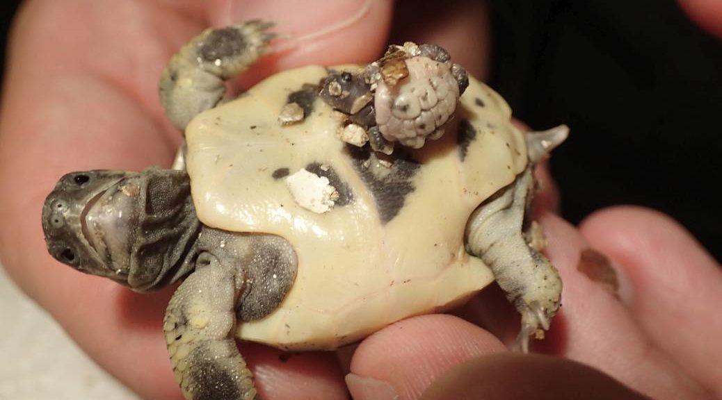 Kleiner Kühlschrank Für Schildkröten : Griechische landschildkröte villa amanda u2013 der schildkröten blog