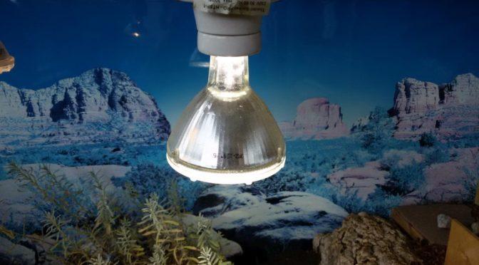 Für euch getestet: Lucky Reptile Bright Sun UV Lampe + Vorschaltgerät