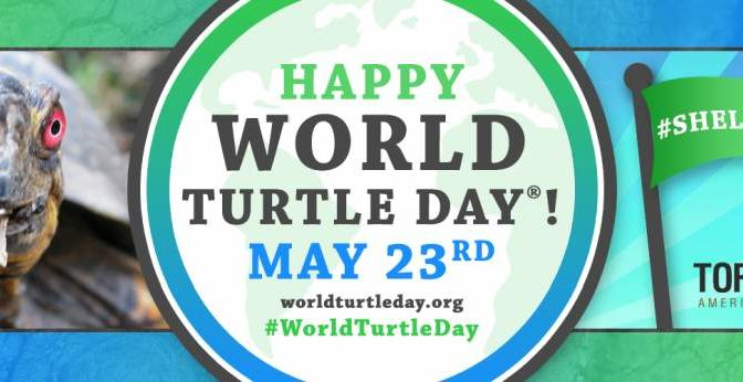 Heute ist Welt-Schildkröten-Tag