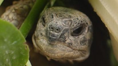 Schildkröte Geruchssinn