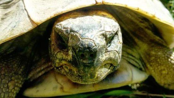 Schildkröten Nase