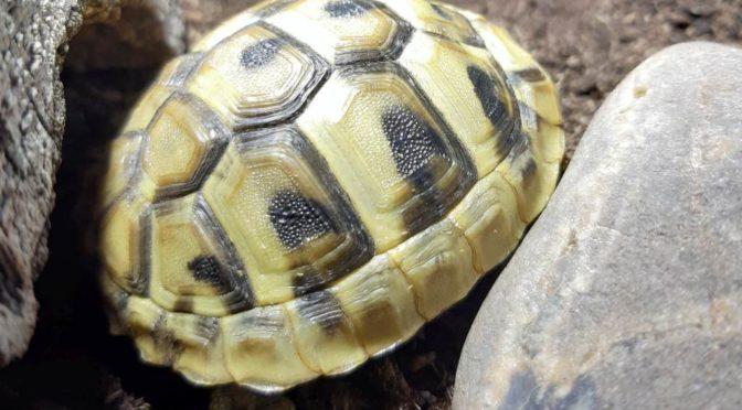 Eine Schildkröte bleibt bis zum Schluss wach.